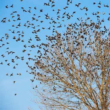 Απώθηση Πουλιών