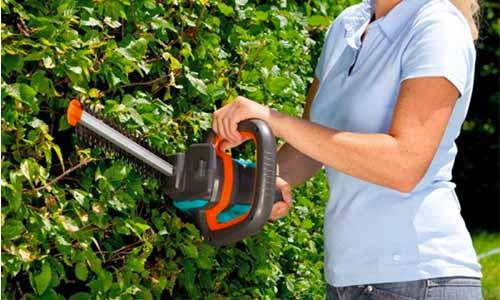 Πώς να φροντίσετε τους θάμνους στους φράχτες σας